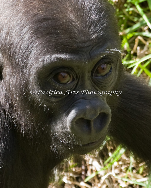 Always inquisitive, Hasani, 14 months old.