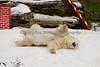 Aaaaaaahhhhh!  Real Snow!!! (Polar Bear, Uulu)