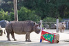 Gene, a Black Rhinoceros (on left), after finding a treat inside the box.  Elly (on right) shows what she thinks of the whole thing. Well, not really, but it does look funny!