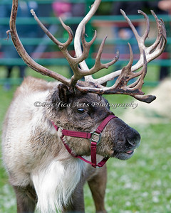 """Hey there - Merry Christmas!"" (Reindeer)"