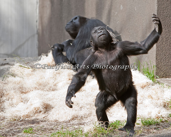 It's fun to close your eyes and throw bedding at yourself! (Hasani, with Nneka in background)