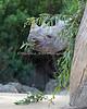 """""""Rhino Camouflage"""" (Elly, a Black Rhinoceros)"""
