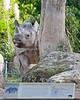 """""""Pucker up!"""" (Elly, a Black Rhinoceros)"""