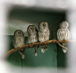 SPb Zoo 2009