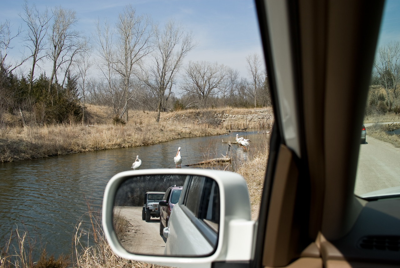 Traffic backed up when we entered the wetlands.