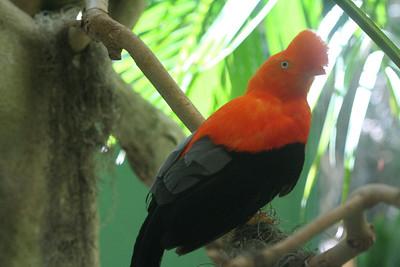 San Diego Wild Animal Park 5/29/06