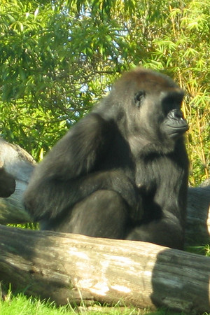 San Diego Zoo 12.22.06