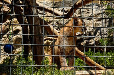 San Diego Zoo-12