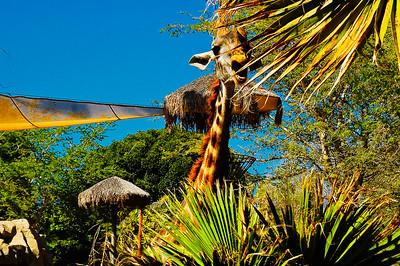 San Diego Zoo-15