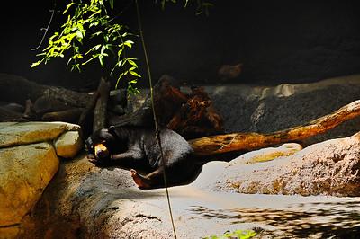 San Diego Zoo-14