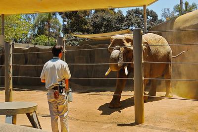 San Diego Zoo-9