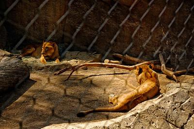 San Diego Zoo-13