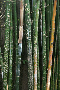 Wanton destruction... bamboo in the Ituri Forest exhibit.