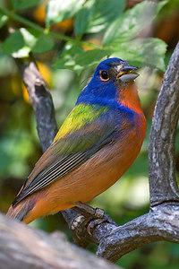 Unknown bird in the Hummingbird Aviary