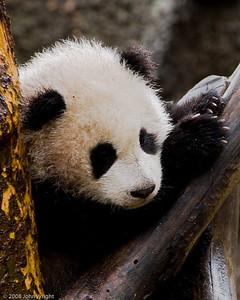 """""""Zhen Zhen"""""""