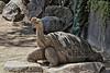 whatsup? Galapagos Tortoise