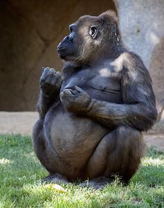 KOKAMO Pregnant and due sometime during November 2016.