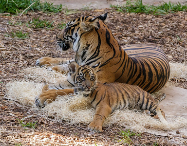 CUB DEBBIE WITH MOM JOANNE.