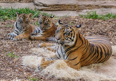 CUBS NELSON & CATHY WITH MOM JOANNE.