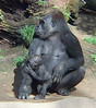 Gorillas. This was taken with a 2 mp. point and shoot camera in the year 2000