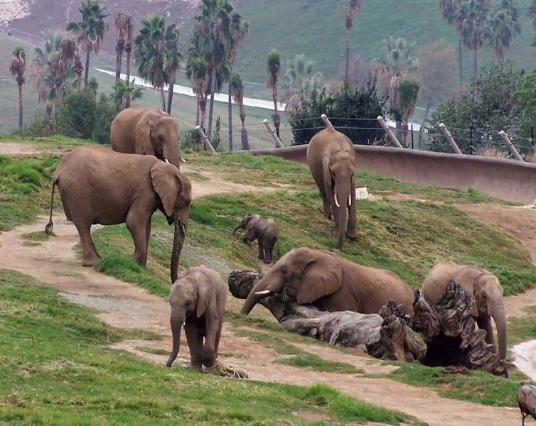 Elephant Family Group