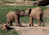 Elephant playtime