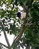 Western Lowland Gorilla Family Group - San Diego Zoo Safari Park