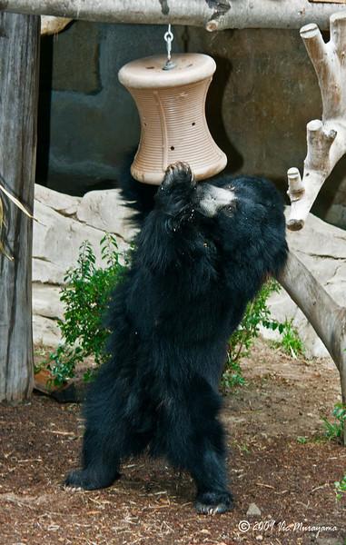 "Male Sloth Bear ""Ken"""
