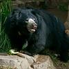 """Female Sloth Bear """"Keesha"""""""