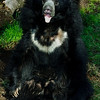 "Male Sloth Bear ""Ken"""
