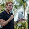 UMBRELLA COCKATOO WITH TRAINER JULIA.