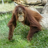 AISHA, A 3 YR OLD JUVENILE FEMALE.