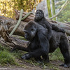 2 YR OLD MALE, DENNY, WITH MOTHER JESSICA