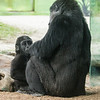 2 YEAR OLD JUVENILE MALE - DENNY AND MOM JESSICA