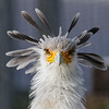 FEMALE SECRETARY BIRD