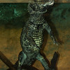 WEST AFRICAN DWARF CROCODILE