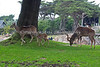 A family of Greater Kudu.