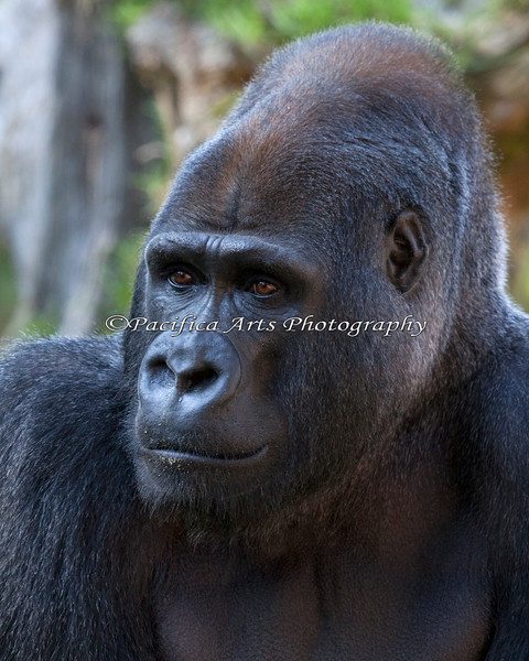 Primate Portraiture - Oscar Jonesy is very photogenic