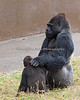 Father & son meeting.  (Gorillas, Hasani & Oscar Jonesy)