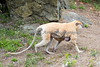 Baby transportation (Patas Monkeys, Winnie & baby)