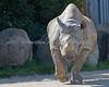 """""""Elly"""", a Black Rhinoceros"""