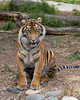 Jillian poses for her kitty picture.  (Sumatran Tiger)