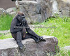 Hasani contemplating his next adventure.