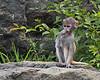 Monkey, Patas - baby