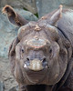 Just love this face!  (Gauhatie, a Greater One-horned Rhinoceros)