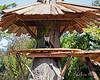Tenzing enjoying he brand new tree house built by the TreeMasters! (Red Panda)