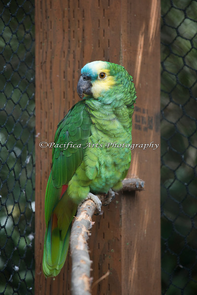 """Hi Maya!""  She's a Blue-fronted Amazon, and you can talk to her on the Nature Trail during the Summer.  Sometimes, she'll even talk back!"