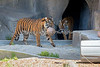 Sumatran Tigers, Jillian (with the ball) and Leanne (coming out of doorway)