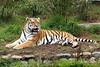 Wow!  <br /> (Siberian Tiger, J.T.)