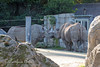 Boone gives Grandma, Elly a kiss.  (Black Rhinoceros)
